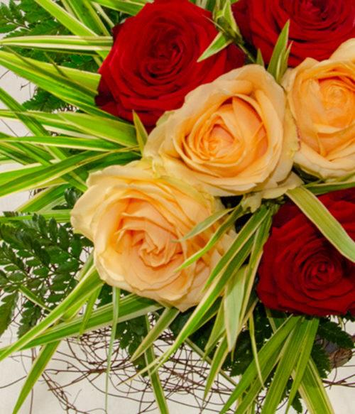Rose, rose 2_